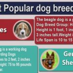[Infographic]10 Most popular dog breeds 2017