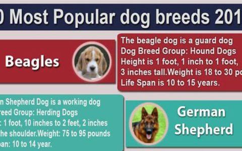 10 mos popular dog breed