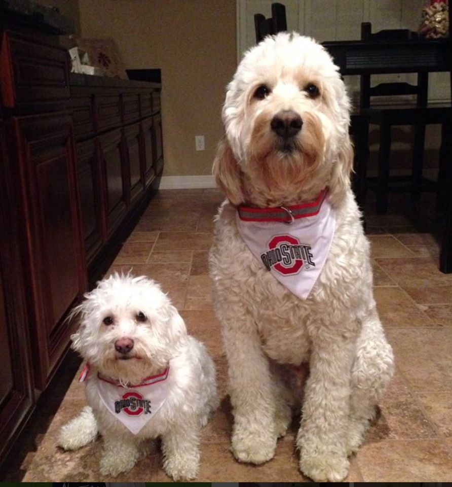 List Of Large Family Dogs