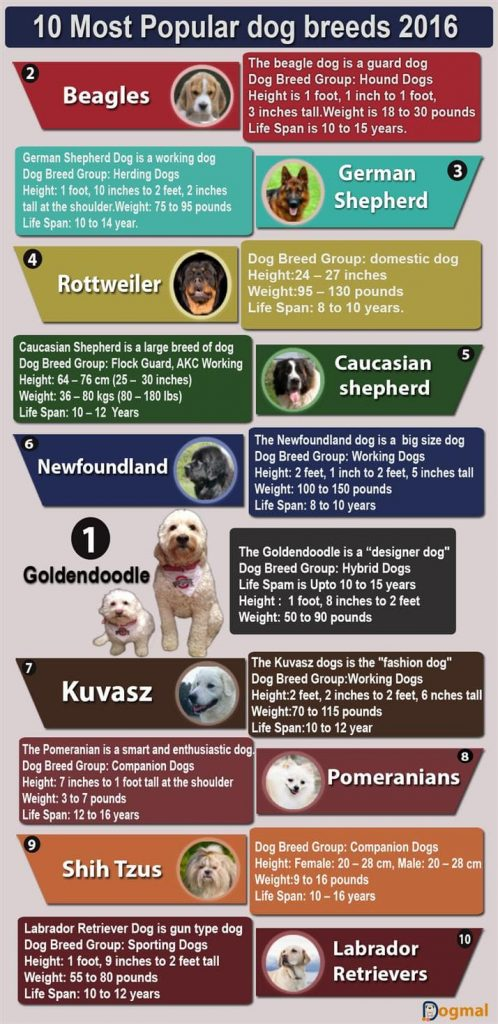 10 Most popular dog breeds 2016