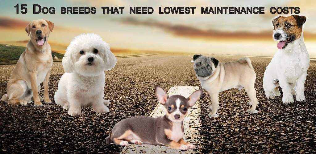 low maintenance dogs