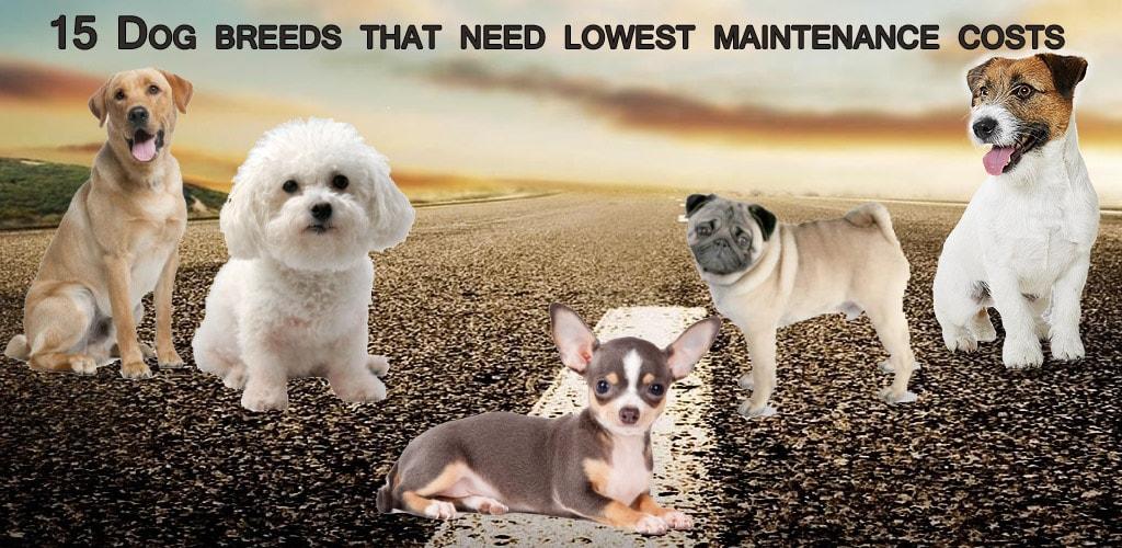 low maintenance dogs
