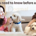 Things you need to know before adopt a dog