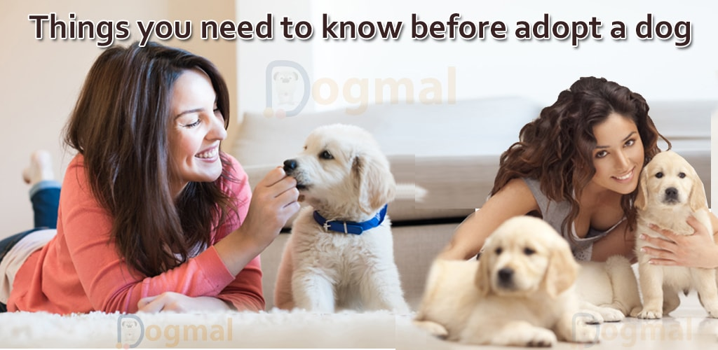Things you need to know before adopt a dog1