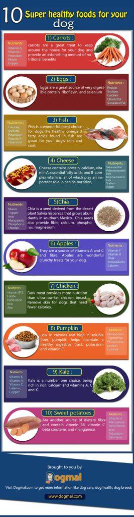 10 super healthy foods dog