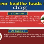 [Infographic] 10 Super healthy foods for your dog.