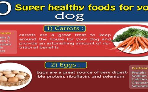 10 super healthy foods for dog