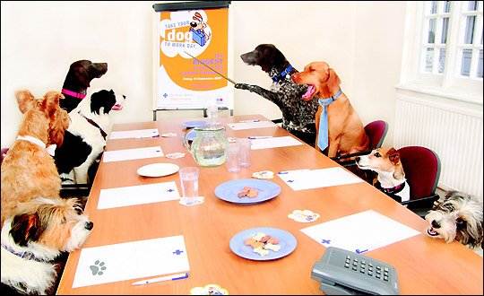 Dogs in office for dogmal