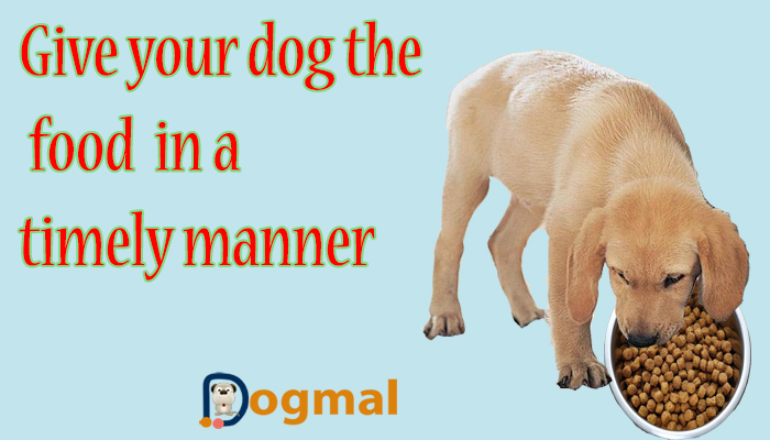 give your dog the food in a timely manner