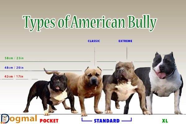 types of american bully dog
