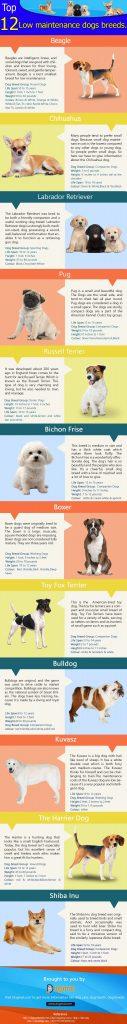 12 Low maintenance dog breeds
