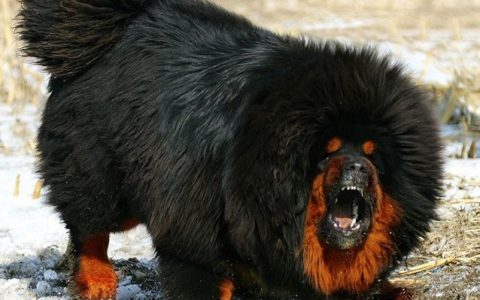 Newfoundland Dog Reviews Real Reviews From Real People
