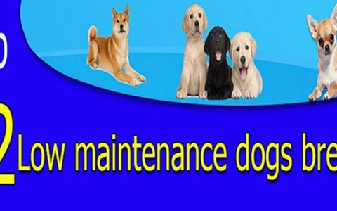 top 12 low maintenace dog breeds