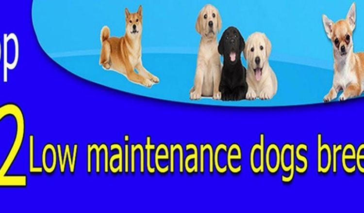 top 12 low maintenace dog breeds