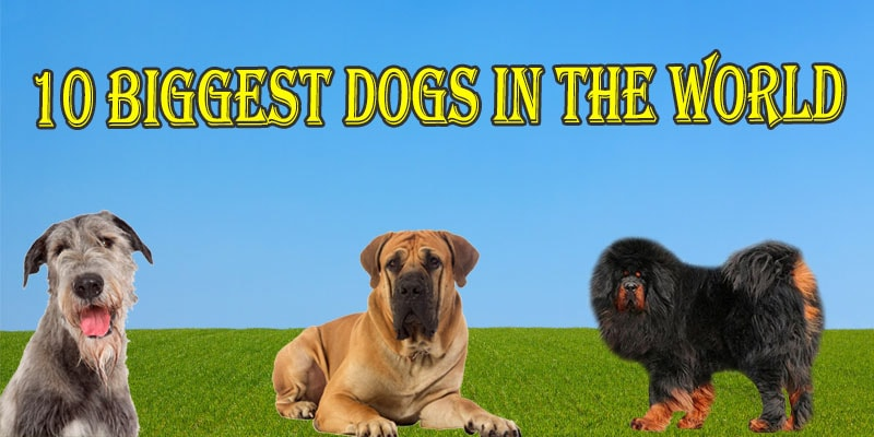 Smallest dogs in the world breeds