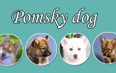 pomsky