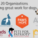 20 Organizations doing great work for dogs