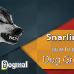 Snarling dog : What it's mean and how to deal with Dog Growling