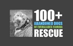hundreds plus abandoned dogs