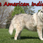 Native American Indian dog