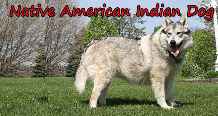 Native North American Dog Breeds