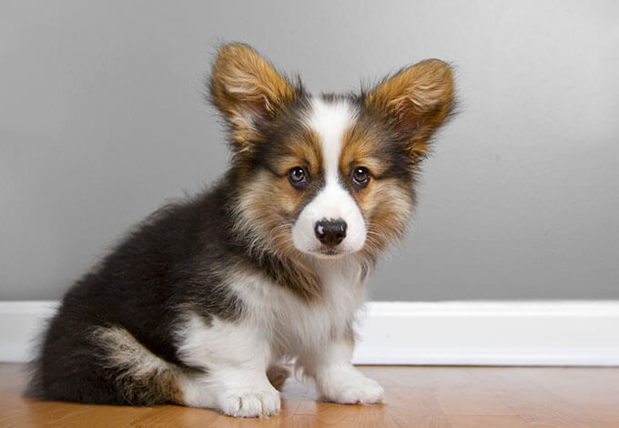Best Mixed Breed Dogs Uk
