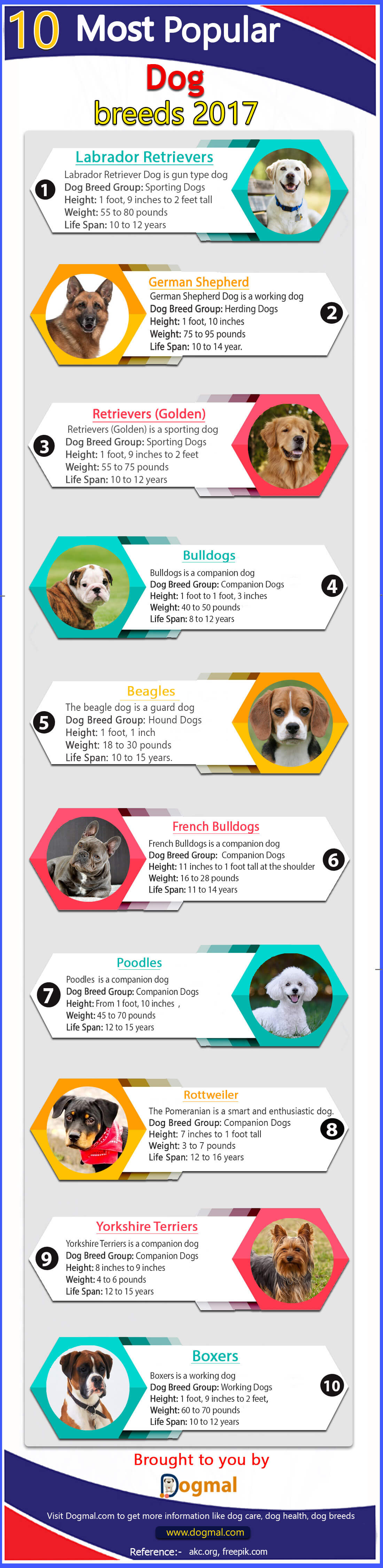 Top 10 Most popular dog breeds 2017 by AKC Infographic