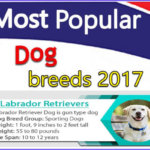 Top 10 Most popular dog breeds 2017