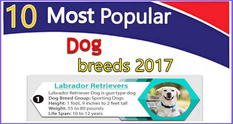 Most popular dogs 2017