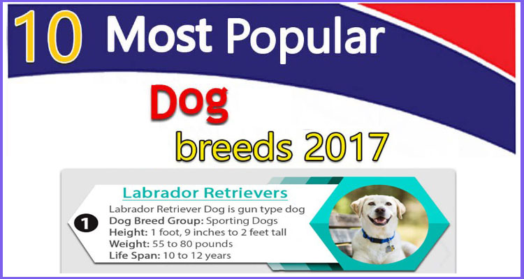 What Is The Most Popular Dog Food