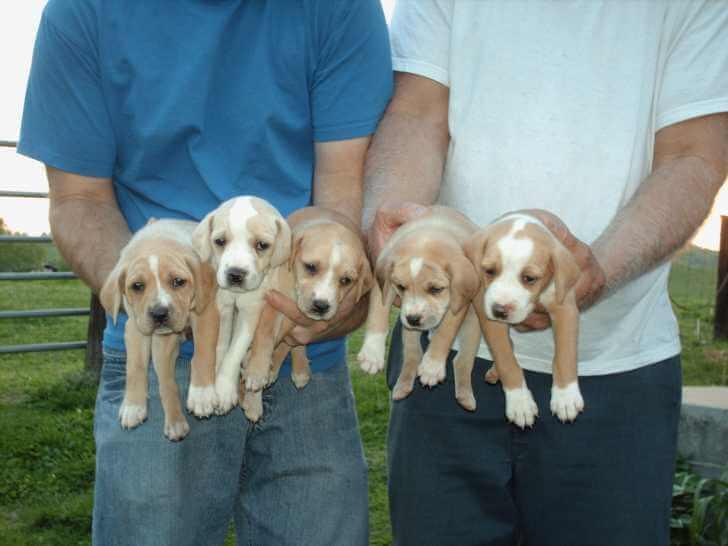 mountain dog breeder