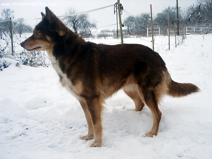 native american indian dog colors