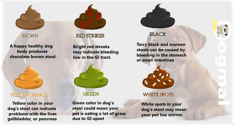 Diet For Small Dog With Diarrhea
