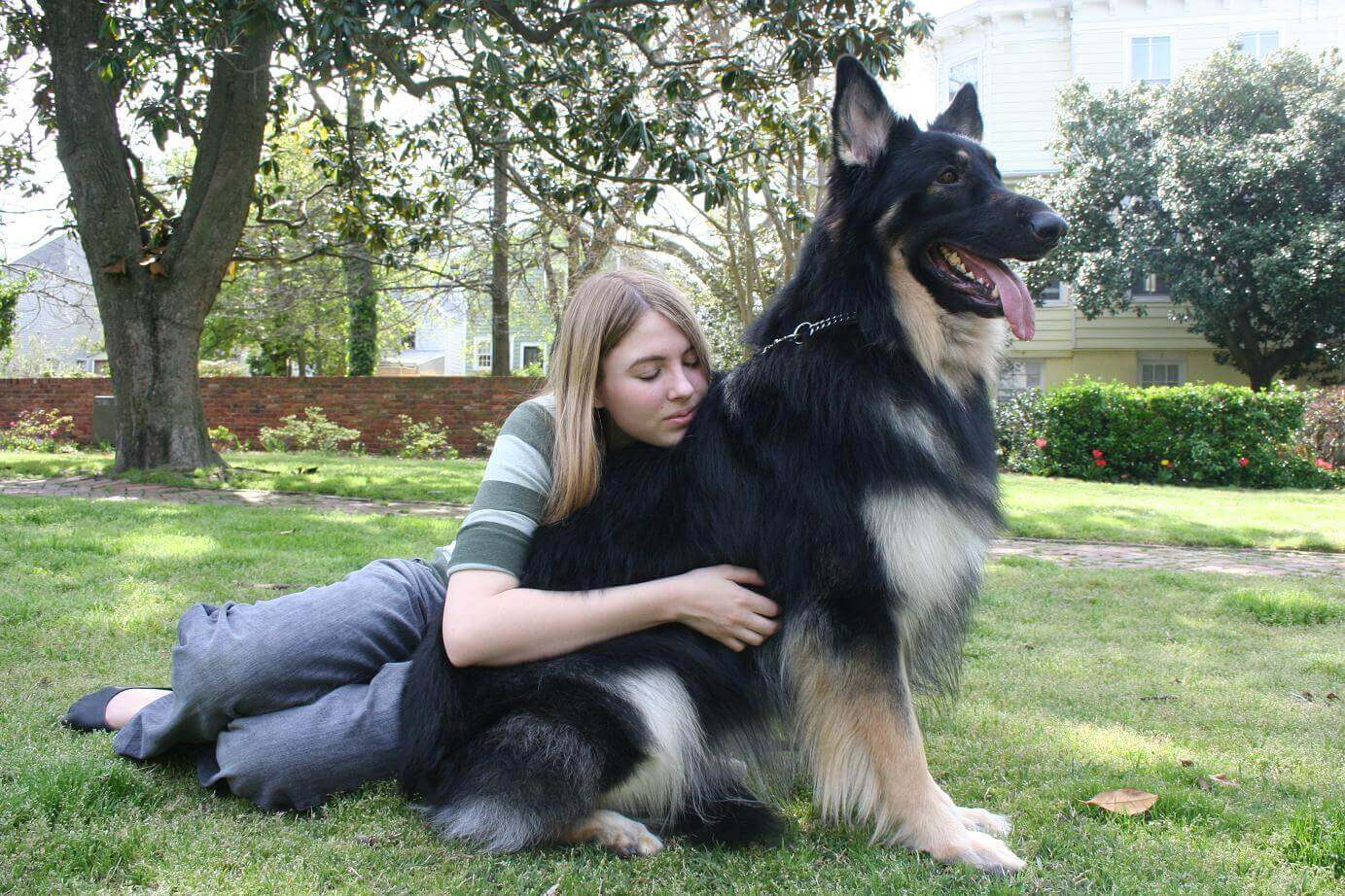 Are King Shepherd Good With Other Dogs