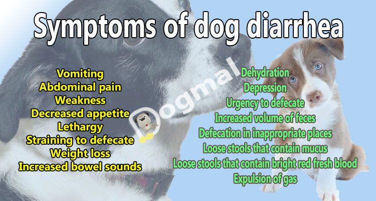 Symptoms of dog diarrhea
