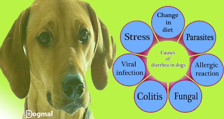 causes of diarrhea in dog