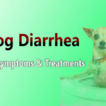 Dog Diarrhea – Causes, Symptoms & Treatments