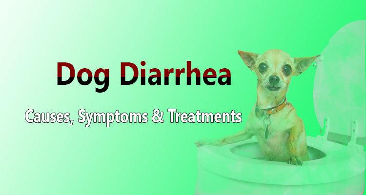 Dog Food Giving Dog Diarrhea