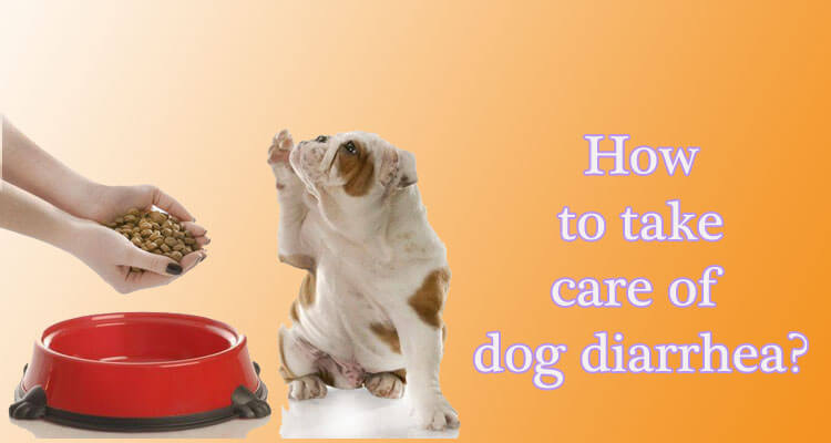 Treat Dog Diarrhea Natural Cures