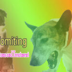 Dog Vomiting – Causes, Symptoms and Treatment