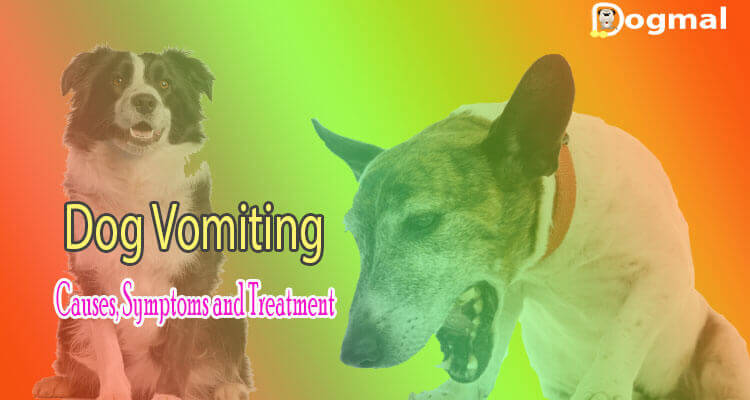 dog vomiting