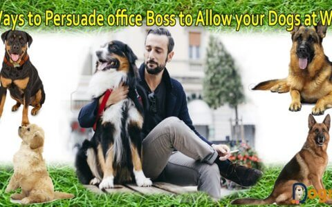 Allow your Dogs at Work