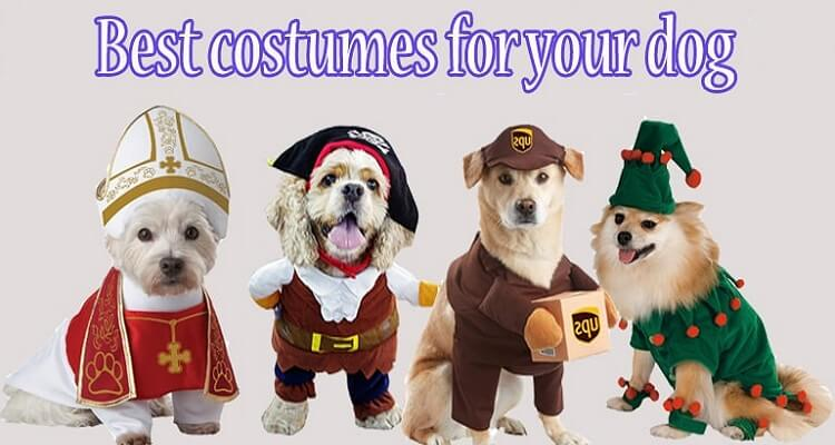 Funniest Best Dog Costumes