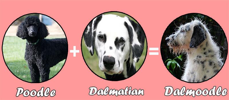 Dalmoodle