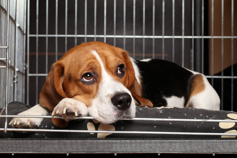 the benefits of having dogs as companions The benefits of adopting a companion animal while in addiction recovery   and though you may resent having to get out of bed in the moment, pets have.
