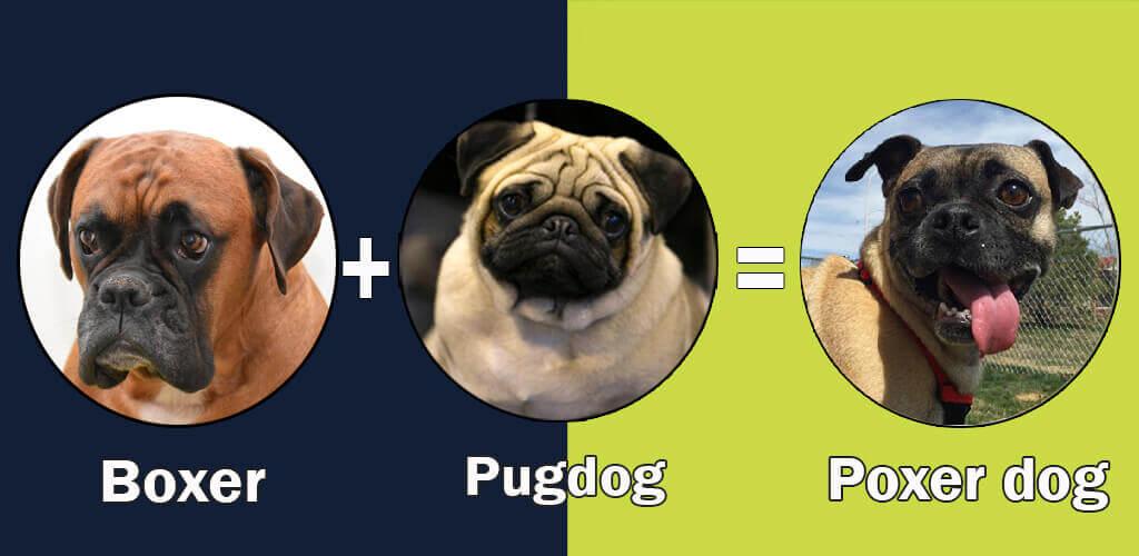 Hybrid Dog Breed Registry