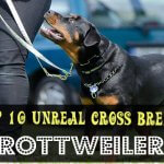 Top 10 Unreal Rottweiler cross breeds