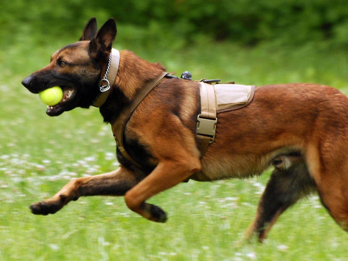 Best Dog Breeds To Run With