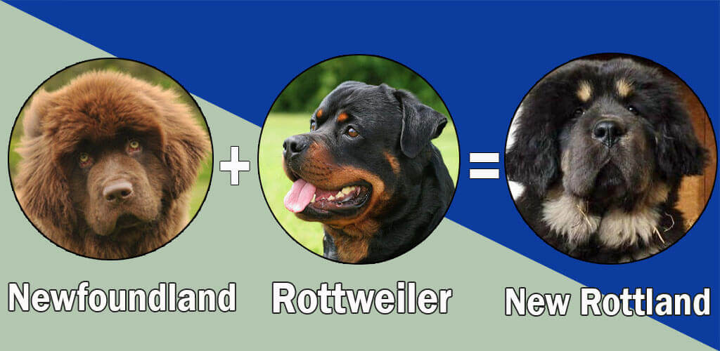 New Rottland