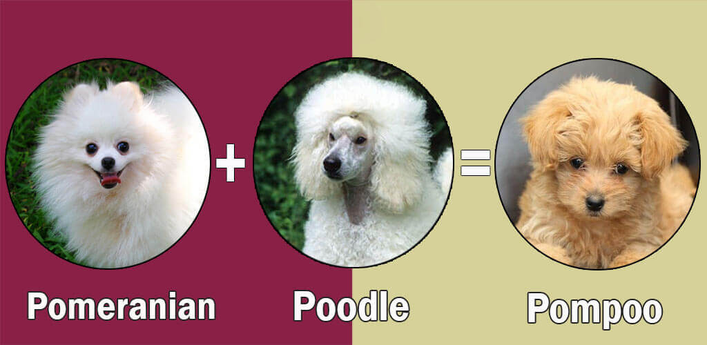 Top  Small Family Dogs